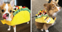 Dogs and Cats Wearing Taco Costumes | Riot Fest