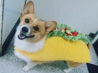 Dogs and Cats Wearing Taco Costumes - Riot Fest