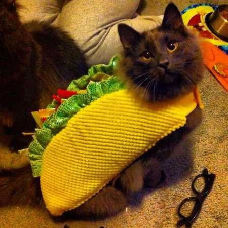 Dogs and Cats Wearing Taco Costumes Riot Fest