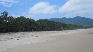 Ilha Grande hopes to protect the sanctity of its shores and preserve its wildlife, Rio de Janeiro, Brazil, News