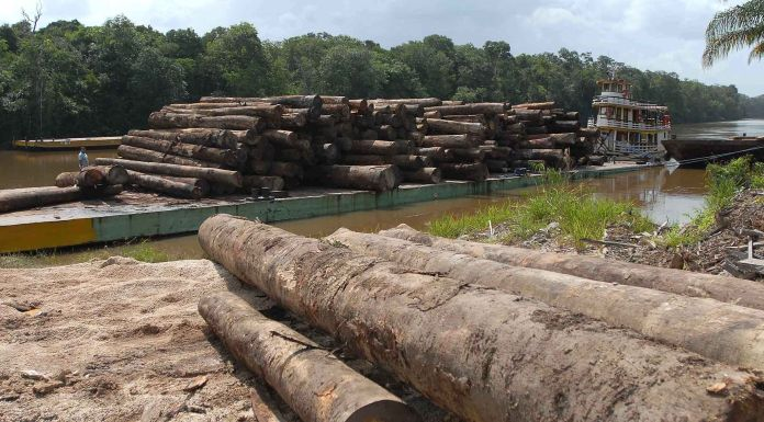 Brazil,Activists fighting against lumber taken out of the Amazon forest are the ones under the greatest danger,