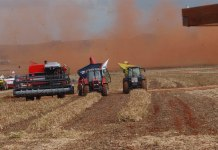 Brazil's agribusiness sector boosted the country's Q1/2017 GDP,