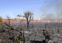 Brazil,Data has shown that since January 1st thousands of kilometers of forest has been burned in the Amazon region.