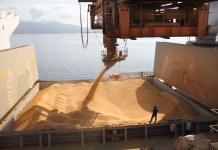 Brazil,Thousands of tons of soybean grains are exported every year abroad.