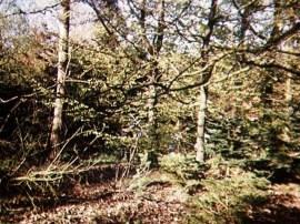 1998-2000Blandede21af84