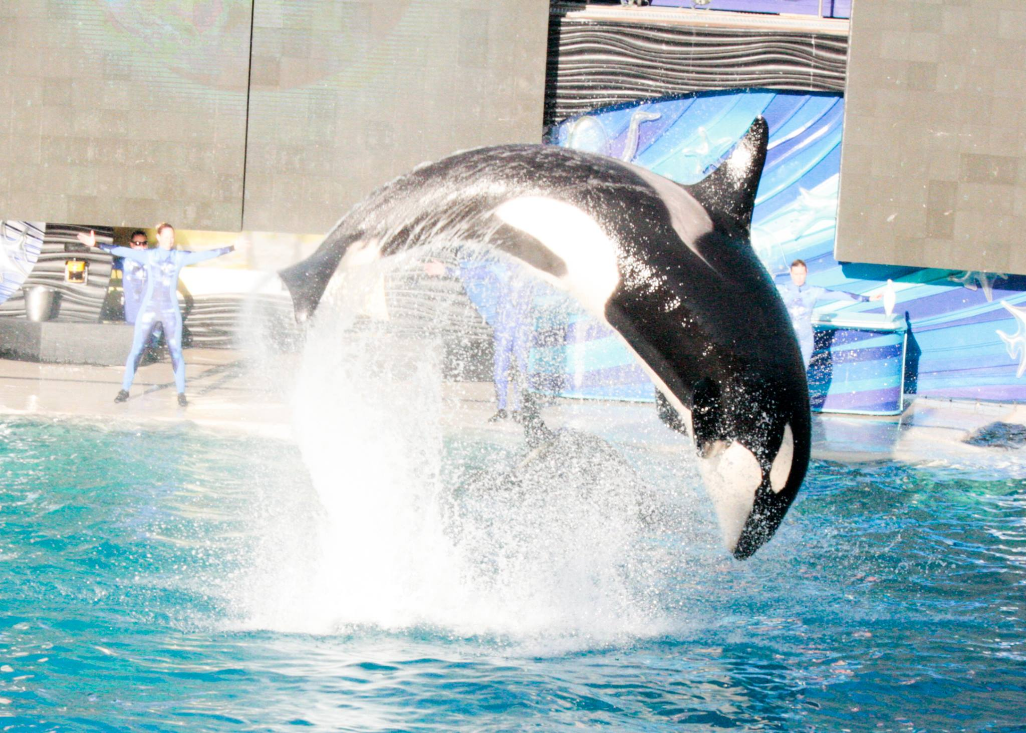 When you're making your list of active vacation ideas in Southern California, don't forget SeaWorld San Diego!