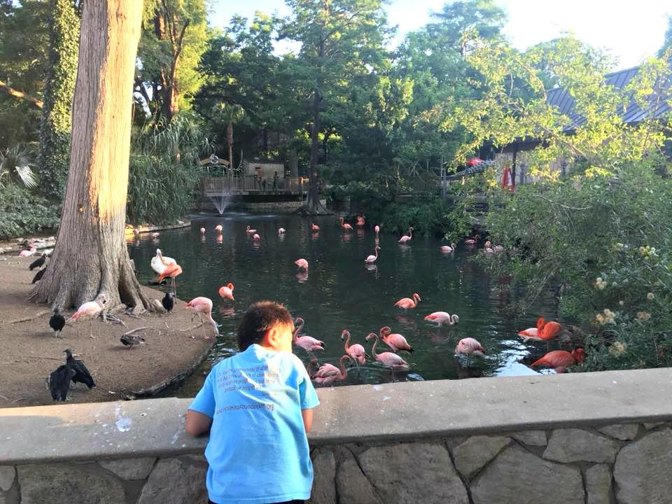 Zoorassic Park and Summer Fun at the San Antonio Zoo