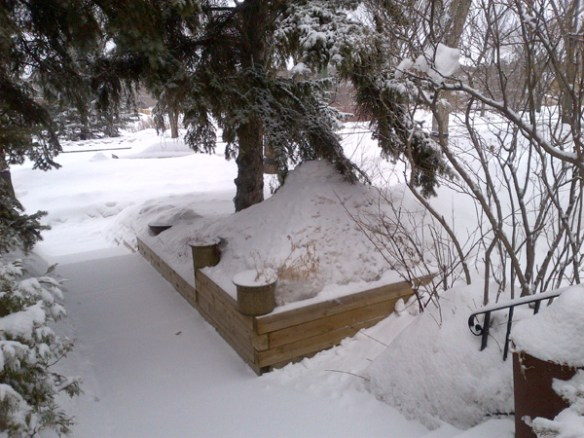 snowy-Regina