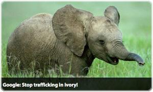 no-ivory-button