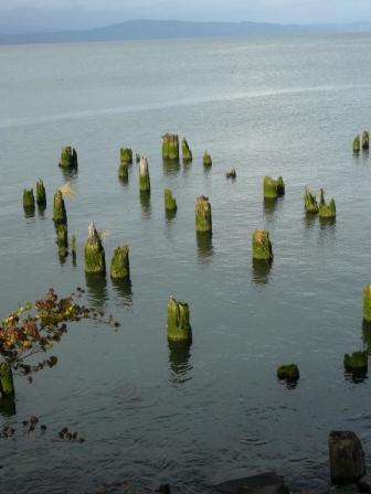 blog-pilings-in-astoria.jpg