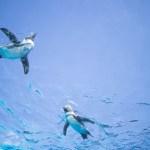 東京都の水族館でペンギン鑑賞!空飛ぶペンギンを見て癒されよう!