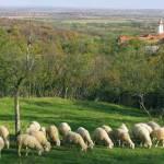 Un zugrav de elită – Vasile Deaconul de la mănăstirea Srediștea Mică