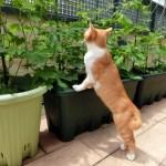 バルコニーの植木鉢や猫ちゃん