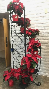 Narthex Poinsettias