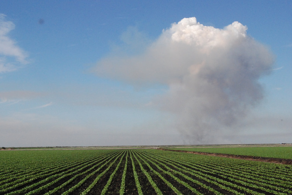 A field used for growing sugar in Florida. Photo Credit: Josh Hallett/ Flickr (CC By 2.0)