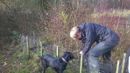 Pup Twiggy supervising volunteer Philip in the tree nursary