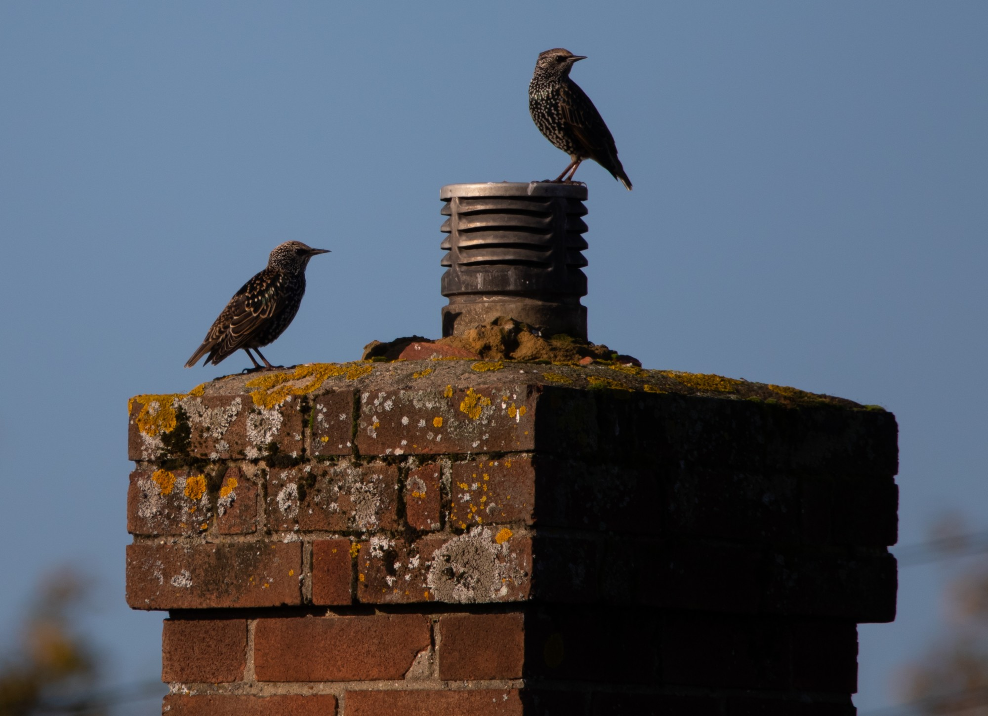 How to Repair a Chimney