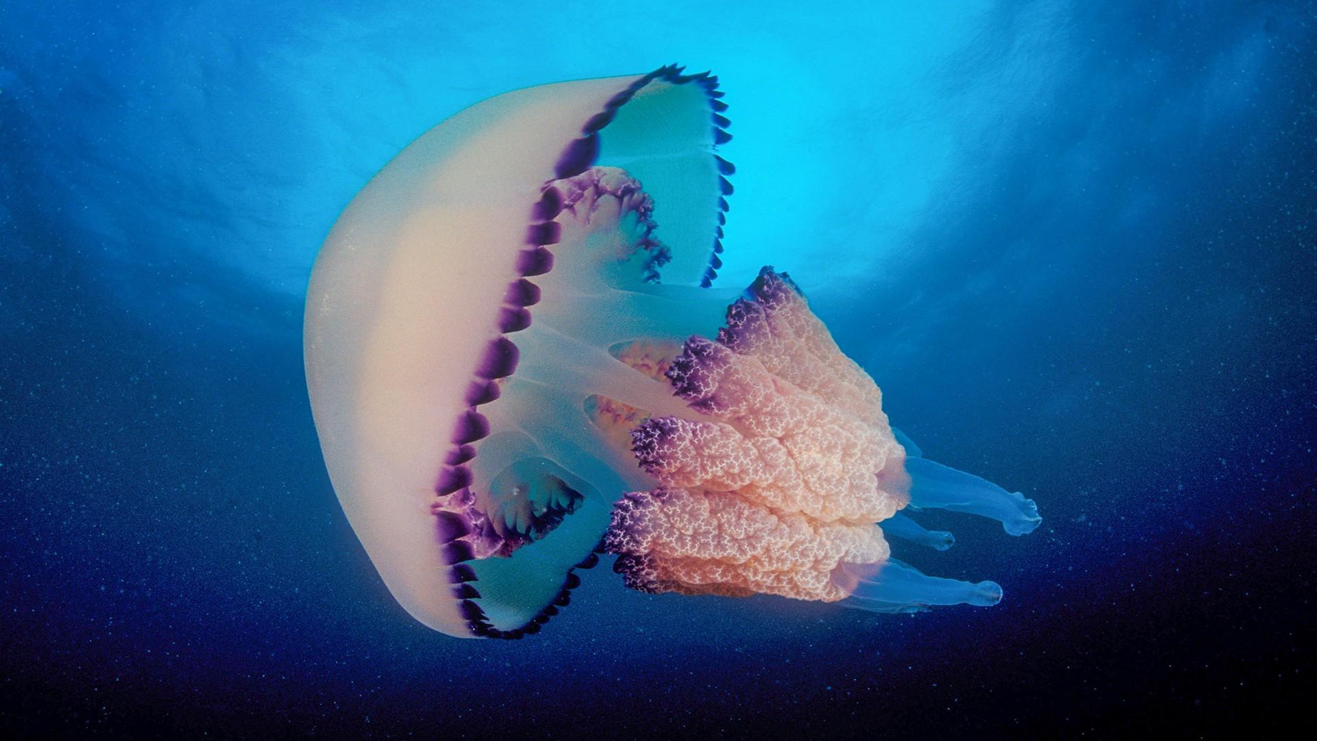 Свадьба лет, открытка медузы