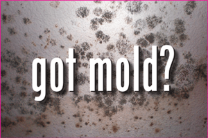 mold-300x200
