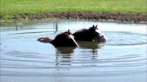 Horses Blowing Bubbles