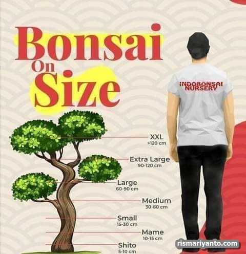 Hobi Baru, Belajar Membuat Bonsai (4)