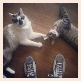Gatos que querem brincar de manhã