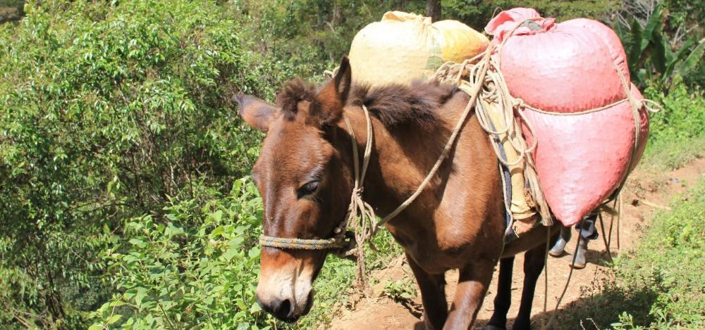 lascapucas.donkey