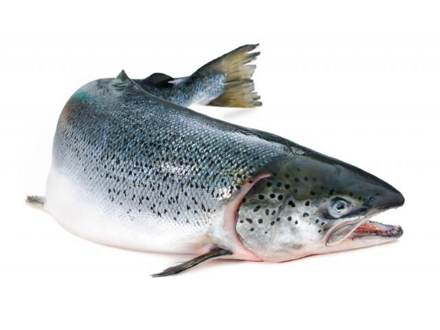 Il salmone al forno con salsa d'aneto e curcuma