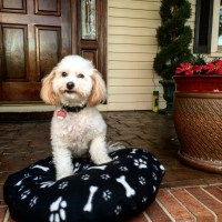 Alpaca Fiber Filled Pet Beds | Rita Dee Alpacas