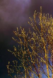 Foto: Rita Nilsen Et ungt liv med faretruende skyer