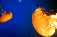 Van_Aquarium-6
