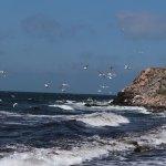 Wellen schlagen an die Küste, Möwen schweben darüber