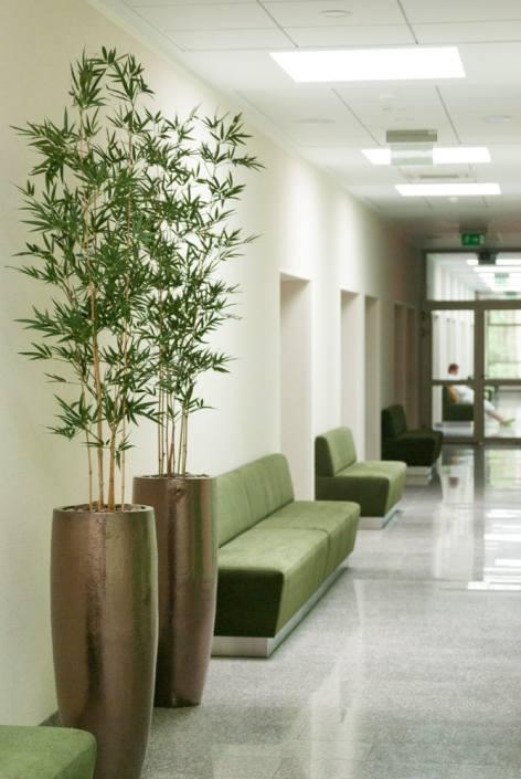 Gėlės Eglės sanatorijos gydyklų koridoriuose