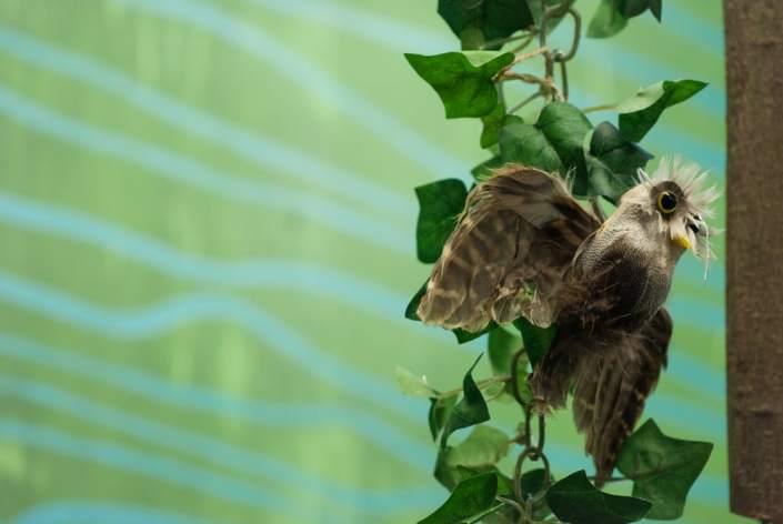 Paukštelis ant šakos