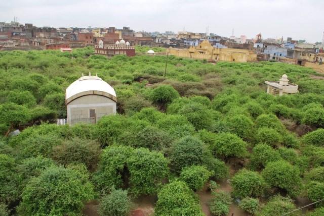 Birds' eye view of Nidhivan