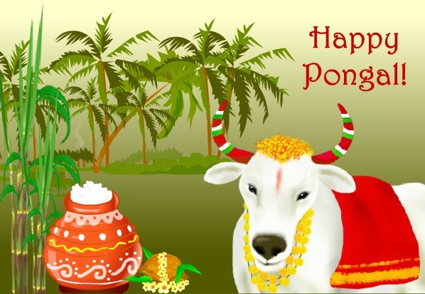 Pongal featival