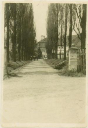 Rittergut Endschütz Pappel Allee um 1941