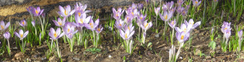 Wir basteln für den Frühling am 12.03.2012