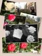 Valokuvakollaashi Oulun Ruusutaideteoksesta