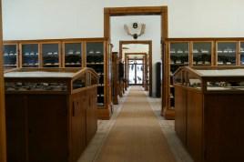 Naturalienkabinett in drei hintereinander angeordneten Räumen