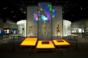 The study identifies the genes of creativity that separate Homo Sapiens from close living and extinct relatives.
