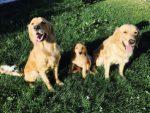 Tre systrar: Chilli, Mira och Vida