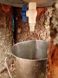 Making old-fashioned soft soap, from wood ash, at RivenJoiner.com.