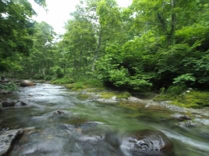 新緑の川に沈む石を透明な水が洗う