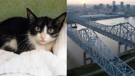 b555f95f2e0e0 LSPCA & NOLA Fire Department Rescue Trapped Kitten From Crescent City  Connection