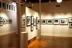 Steven Forster Gallery