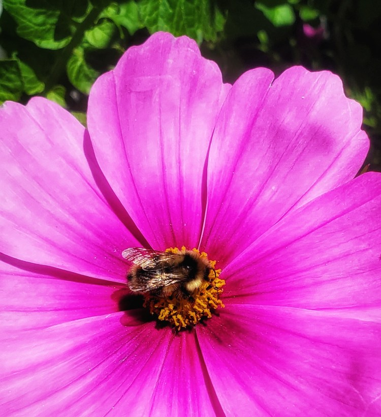 A friendly pollinating visitor