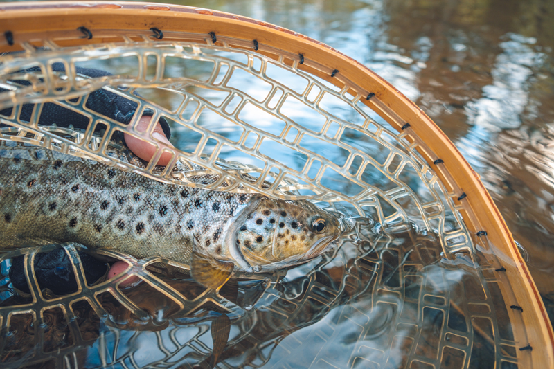 Green River Trout