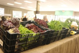 Many varieties of lettuce —including e.Coli-free romaine — were offered for sale.