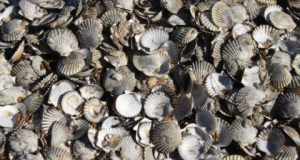 2011_0329_oysters
